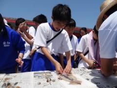 イカのさばき体験4